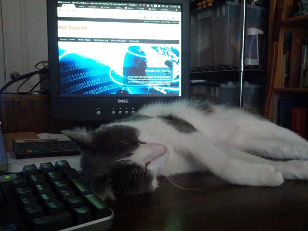 Jayne Catt sleeping on my desk