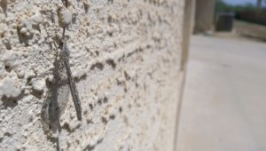 Lacewing Critter on the Wall